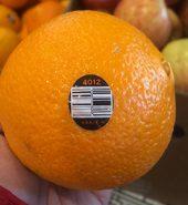 大 新奇士橙 4个