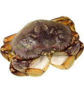温哥华大蟹 未处理重量,2.2-2.5磅