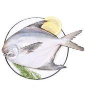 白鲳鱼 未处理重量0.8-1.2磅