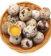 阳光农场鹌鹑蛋 盒, 18个