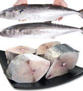 新鲜花鲛魚 磅
