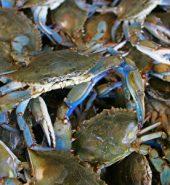 大蓝蟹 打/半打