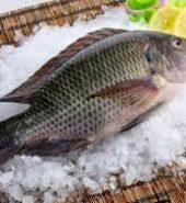 游水金山鲫鱼 未处理重量1.8-2.2磅