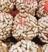鲜花生 袋 1.9-2.2磅