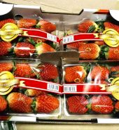 韩国 雪里香草莓 盒装/箱装